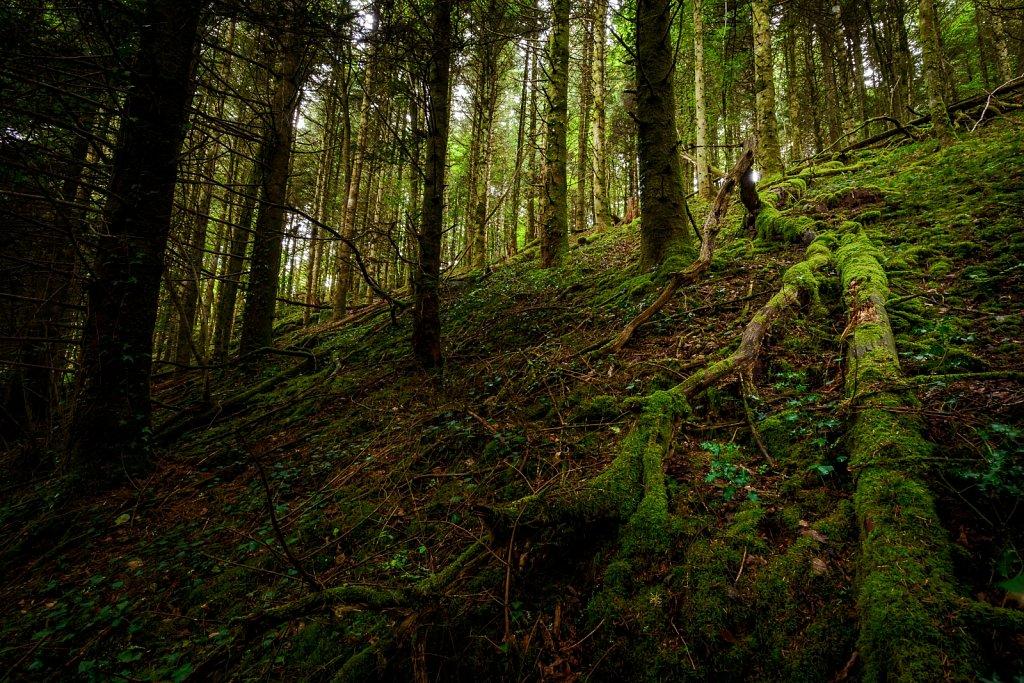 Dans nos bois